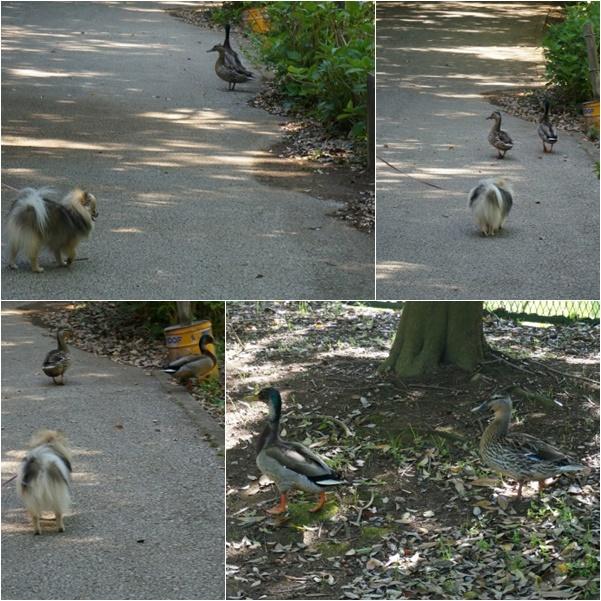 公園散歩7 14-6