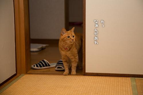 わーっ(´・艸・`)