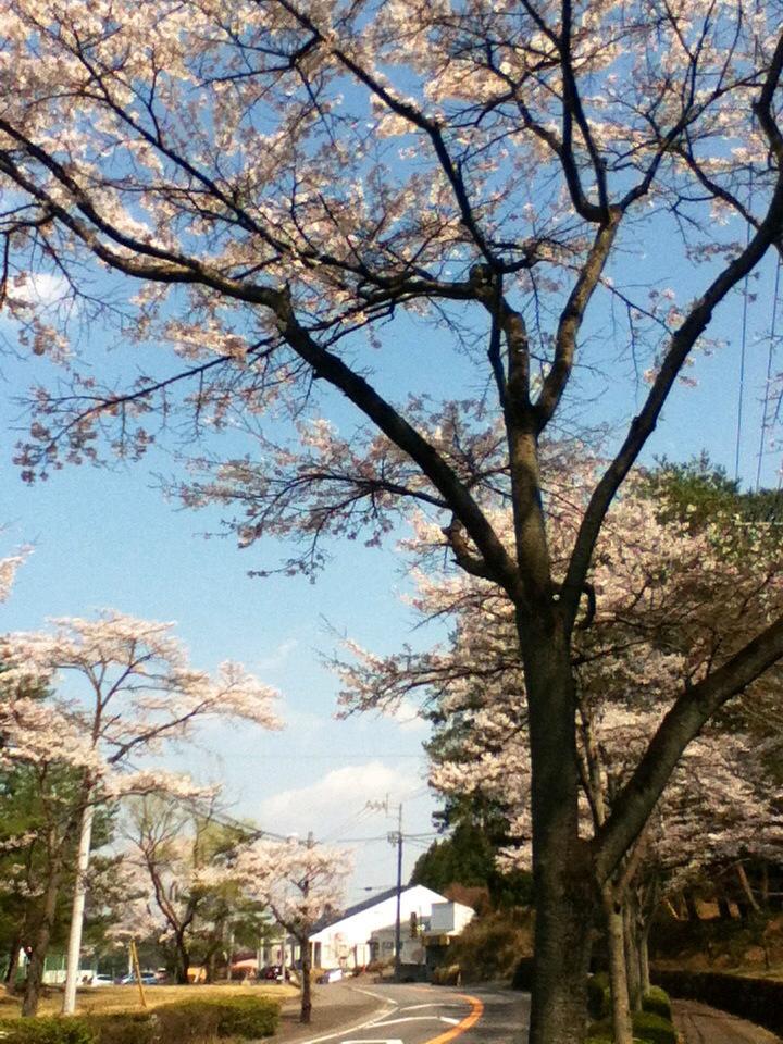 karakusakura.jpg