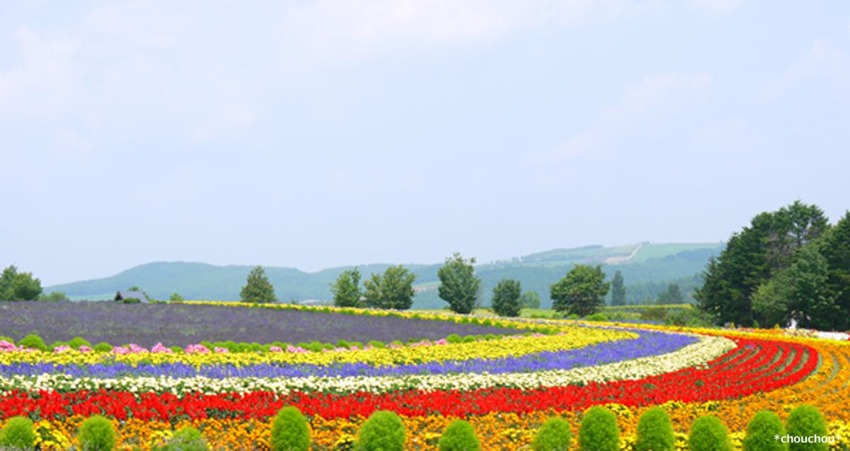 ぜるぶの丘 お花畑