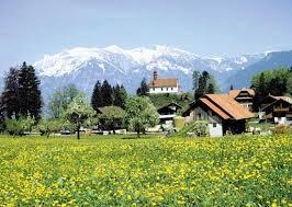 スイス 春 花
