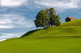 スイスの丘