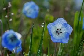 1 flower in the rain