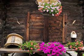 flower and house