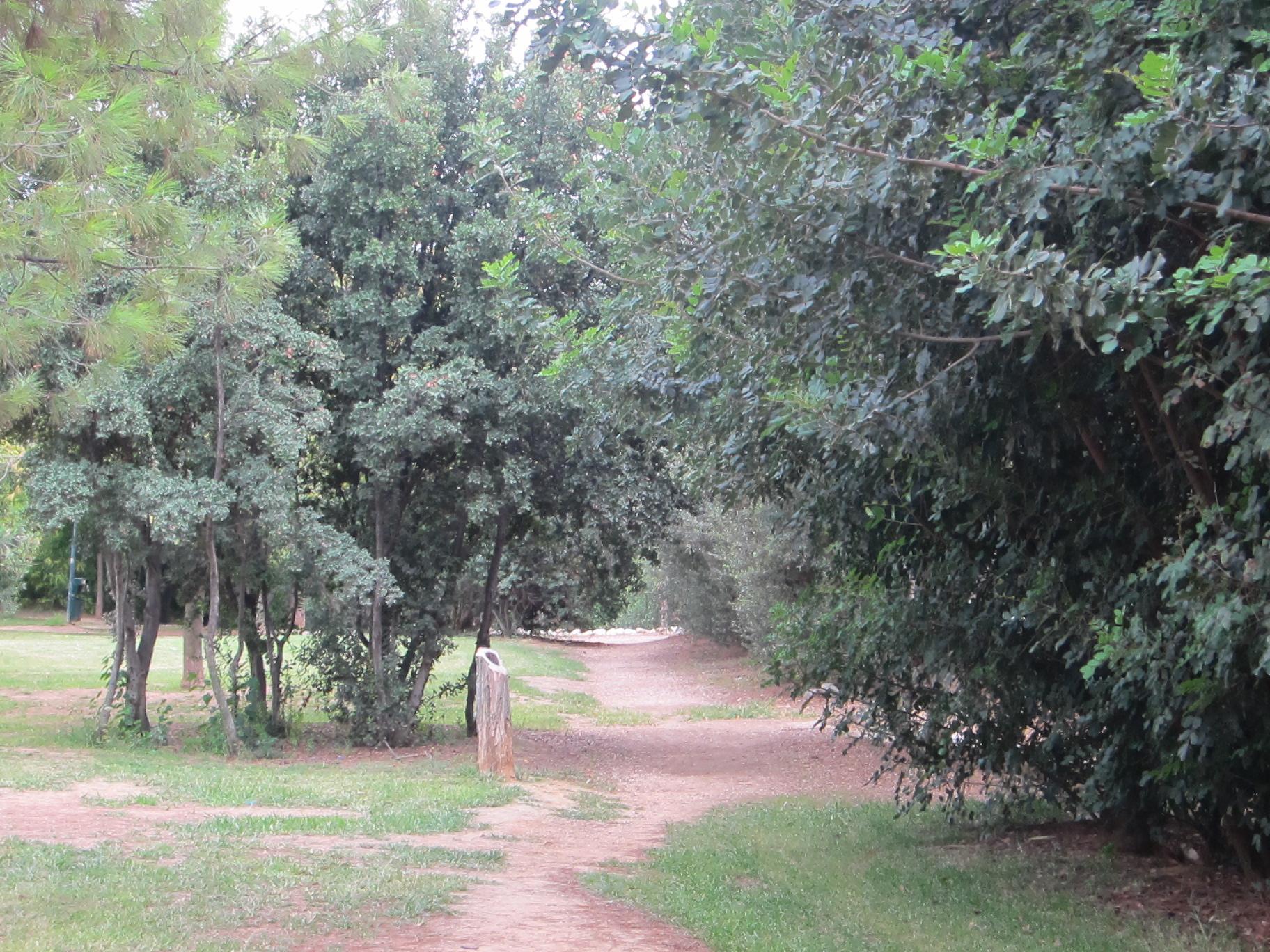 green park tree