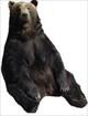 bear1_R.jpg