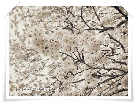 桜20140403
