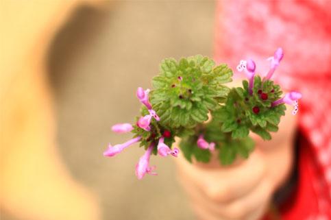 お花とこども