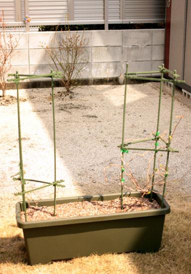 サルナシ植え替え完成図