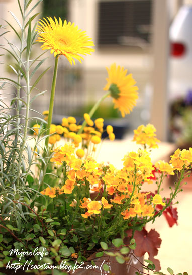 黄色の寄席植え