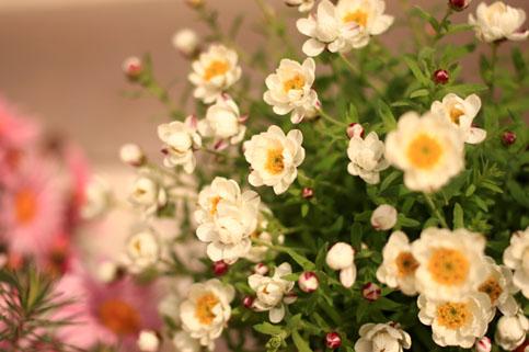 花かんざし0302