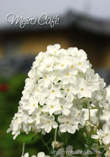 140720白い花