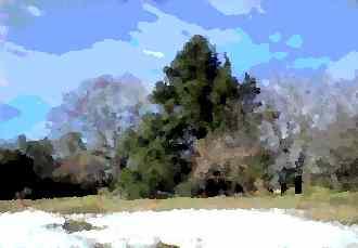 雪の城址公園