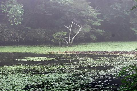 神秘的な根池の風景1