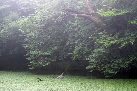 神秘的な根池の風景2
