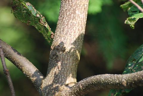 その木肌が