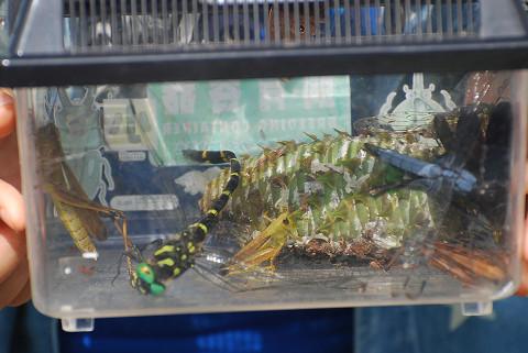 虫かごの昆虫