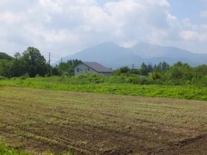 2014soba-hatuga5-web300.jpg