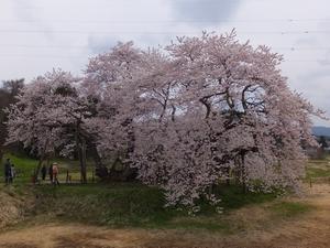 isibezakura3-web300.jpg