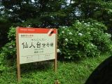 2014/7 箱根あじさい12