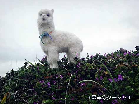 羊毛アルパカ2