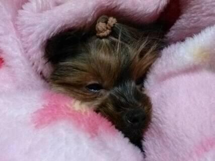 そらの毛布の中で眠いの1
