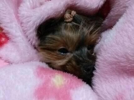 そらの毛布の中で眠いの2