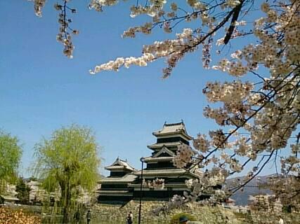 松本城にお花見2