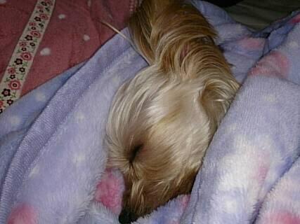 疲れて眠るクラリス1