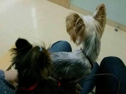 14.5.15狂犬病予防接種とフィラリア5
