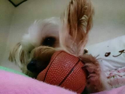 クラリス、ボール大好き1