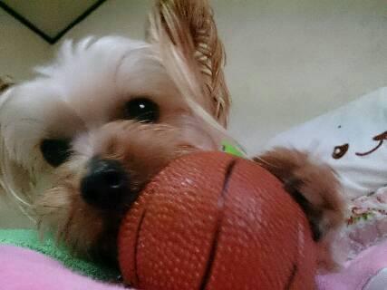 クラリス、ボール大好き3