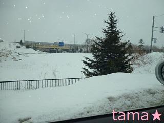 P1000439雪