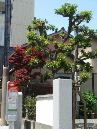 平成26年5月新緑の候