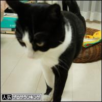 dai20140213_banner.jpg