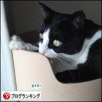 dai20140217_banner.jpg