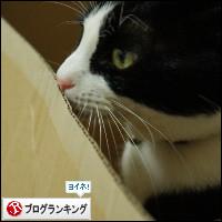 dai20140221_banner.jpg