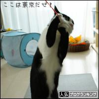 dai20140306_banner.jpg