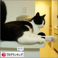 dai20140326_banner.jpg