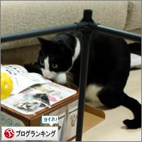dai20140331_banner.jpg