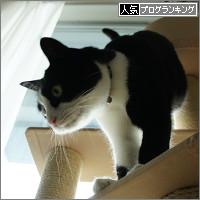dai20140404_banner.jpg