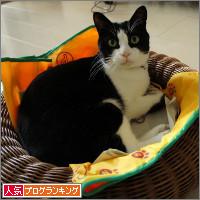 dai20140407_banner.jpg