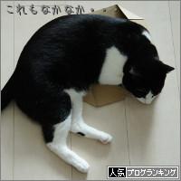 dai20140422_banner.jpg