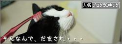 dai20140514_banner.jpg