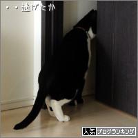dai20140523_banner.jpg