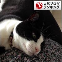 dai20140604_banner.jpg