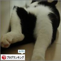 dai20140714_banner.jpg
