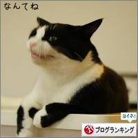 dai20140829_banner.jpg
