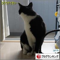 dai20141109_banner.jpg