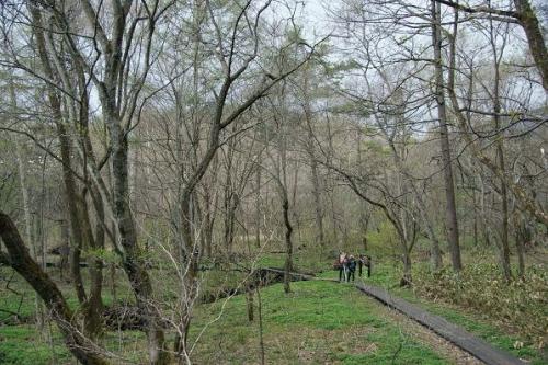 8キロの桜並木11